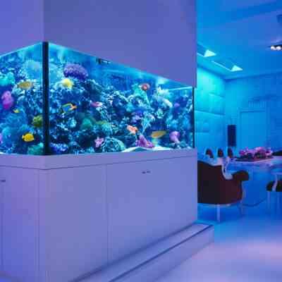 Аквариумы под заказ Самара, изготавливать аквариумы под заказ, Аквариумы под ключ, купить аквариум в Самаре